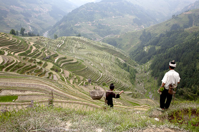 Trekking tour of tiger leaping gorge and haba snow for 100 rice terrace drive columbia sc